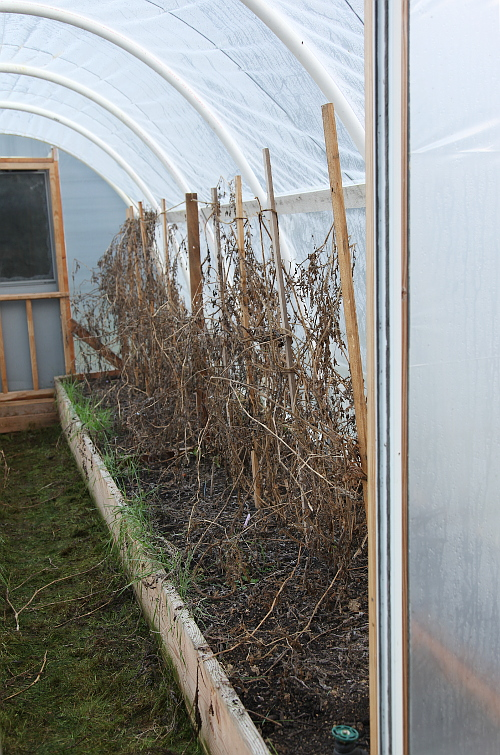 hoophouse_clearing_0
