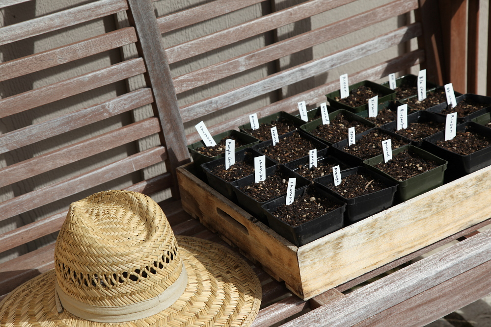 planting_3