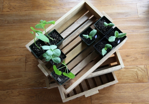 seedling_trays_4