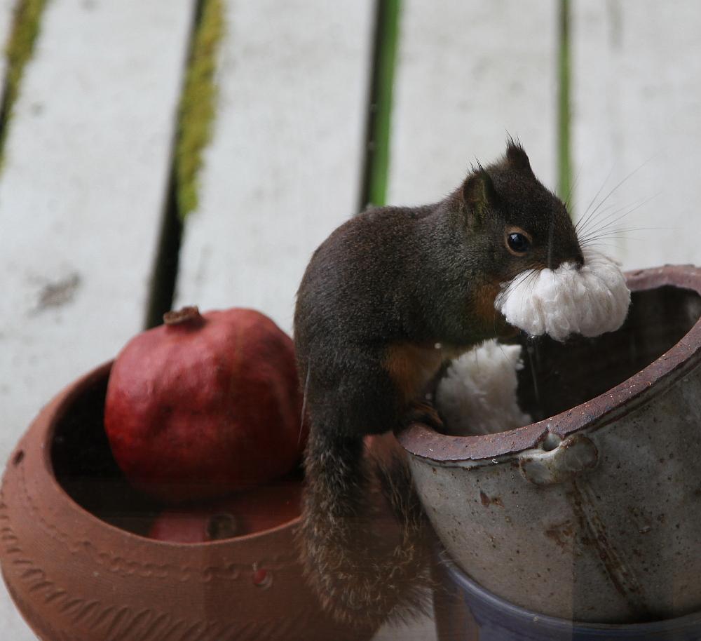 squirrel_stuffing_1