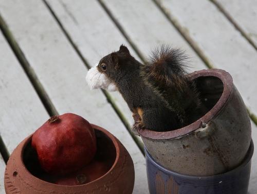 squirrel_stuffing_2