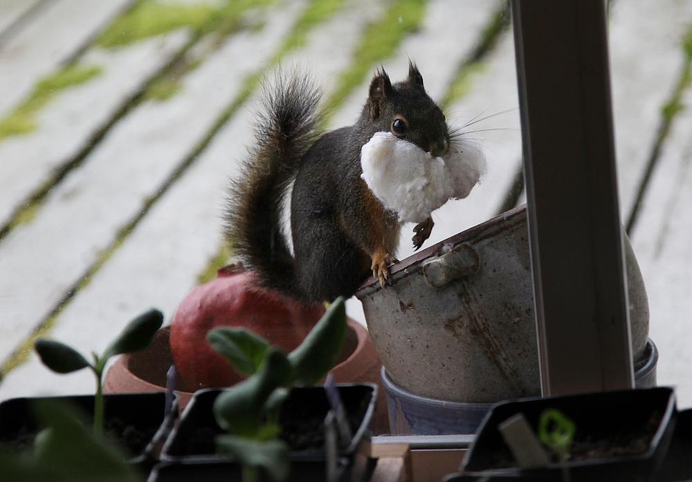 squirrel_stuffing_4