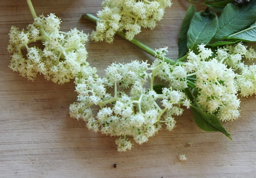 elderflower_tincture_1