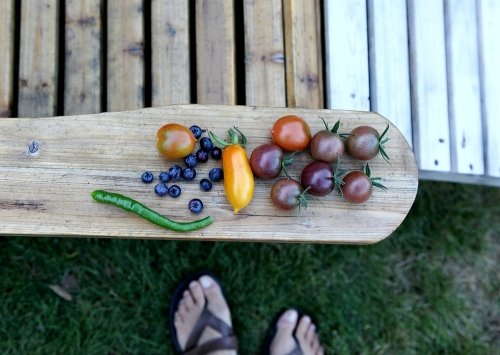 tomatoes_blues