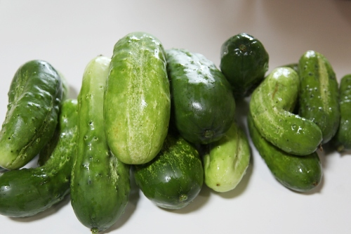pickles_0