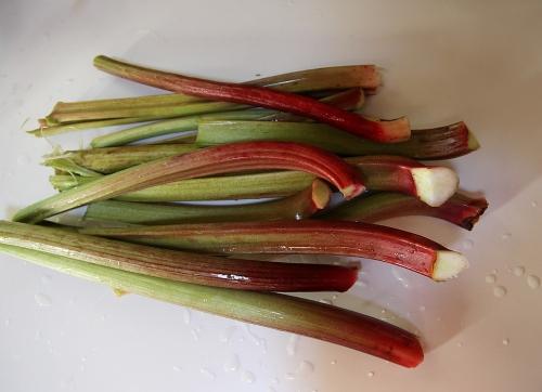 rhubarb_1