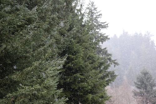 snow_0a
