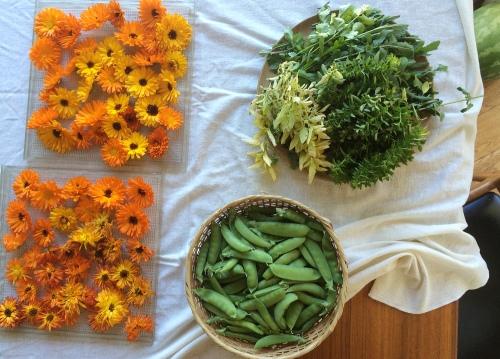 herbs_peas