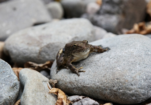 toad_0