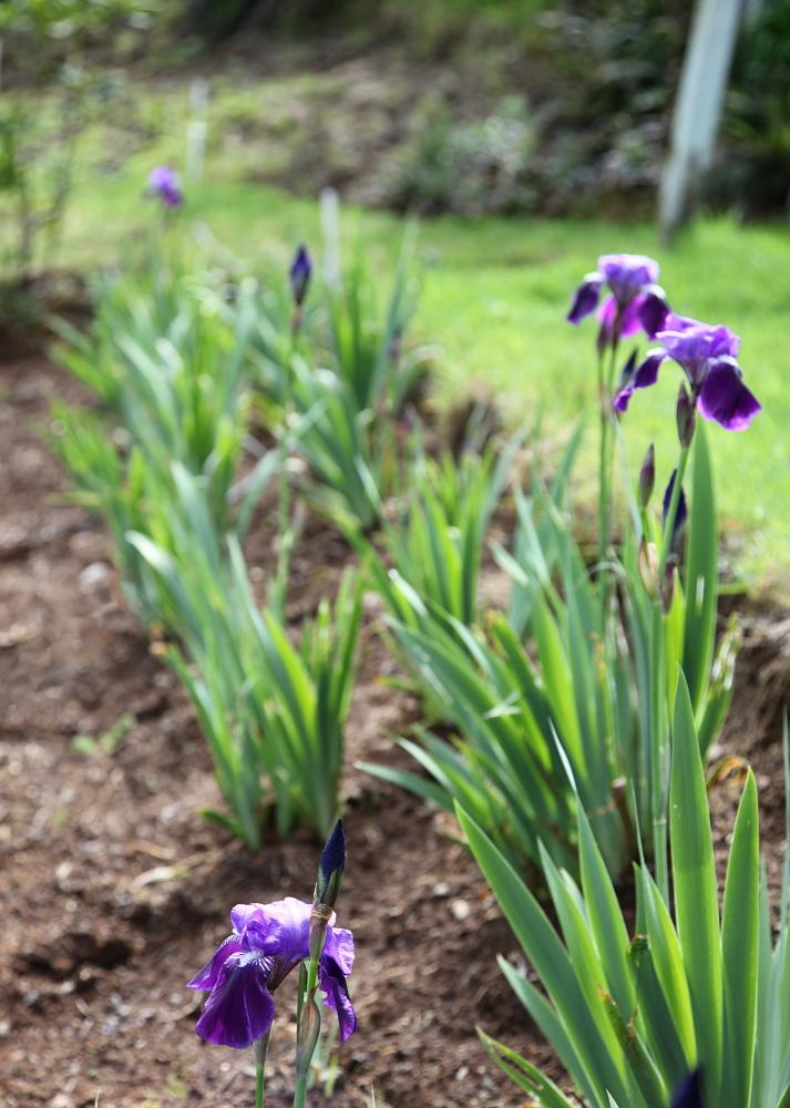 iris_march29_0