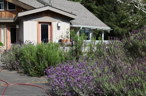 home_lavender_0