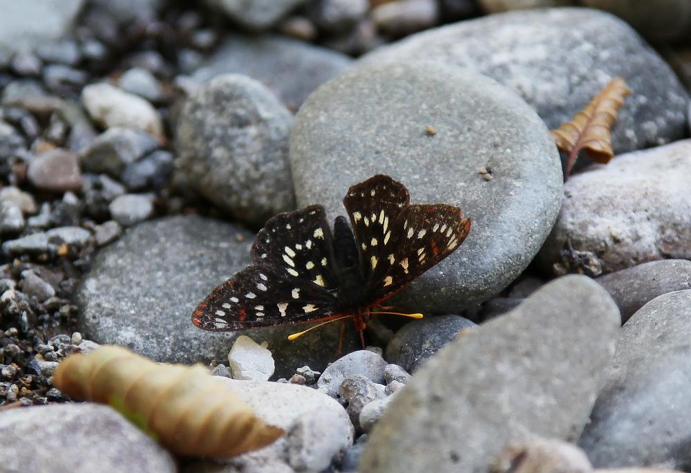 butterfly_1_crop